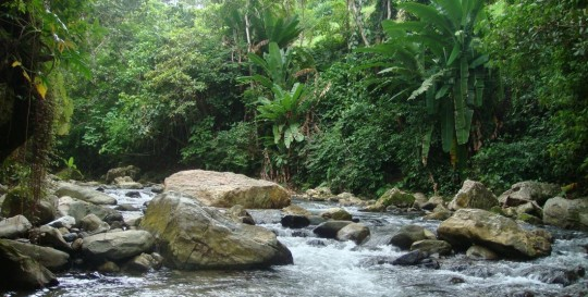 River in the rain forest
