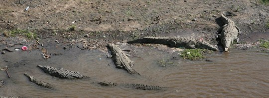 A stop for lunch and checking out crocodiles