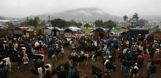 The animal market