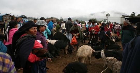The animal market in Otavalo