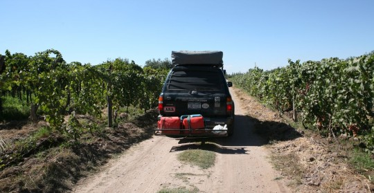 Driving across the vines, close to Mendoza, Argentina