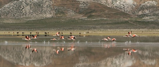 We disturbed pink flamingoes as we are driving through the desert