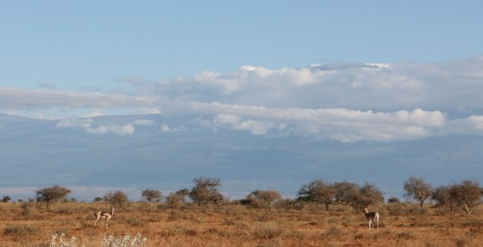 The mountain, seen from Amboseli, where I stayed just few minutes.