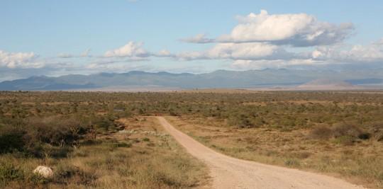 Amboseli's tracks.