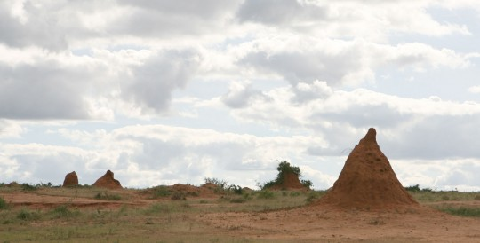 Giant anthills in the Ethiopian countryside.