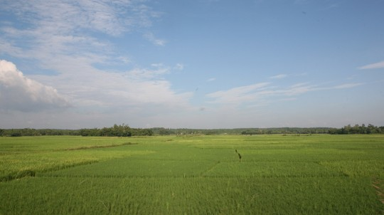 Rice is grown everywhere. The country is very flat and covered with water. The country would be the first nation to disappear if the sea level rose due to global warming.