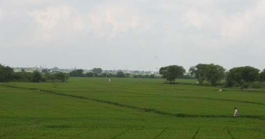 The center of India is dedicated to agriculture.