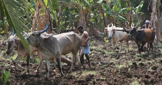 Farmers working the fields.