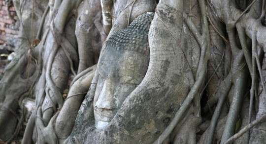 Buddha head embedded in roots at Wat Phra Mahathat, Ayuthaya.