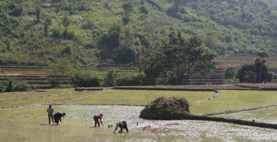 People at work in rice fields.