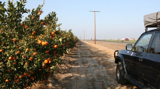 Numerous orange trees and vines can be found close to Porterville.